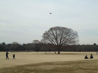 連凧見たかった・・・.jpg