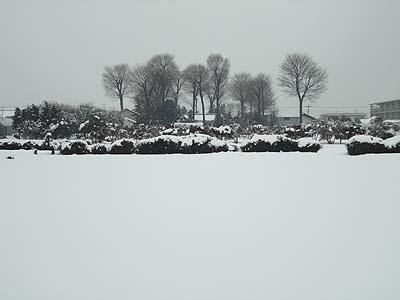 雪を踏みに入ったら足が埋まること必至です。.jpg